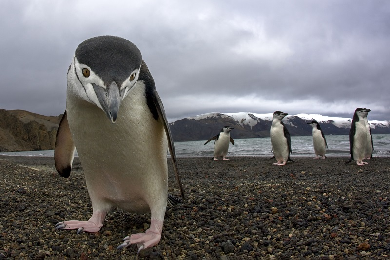 Changes to Google's Penguin No Longer Penalize Entire Websites